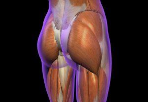 坐骨神経痛の原因 筋肉